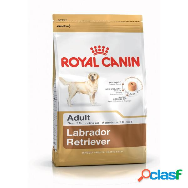 Royal Canin Razze - Royal Canin Labrador Retriever Adult
