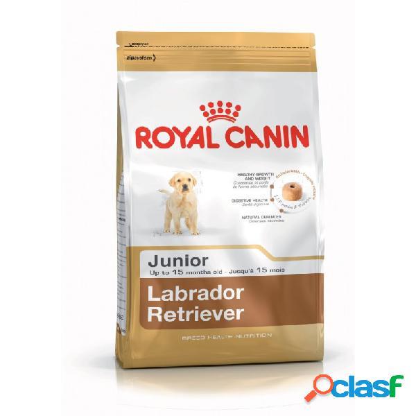 Royal Canin Razze - Royal Canin Labrador Retriever Junior