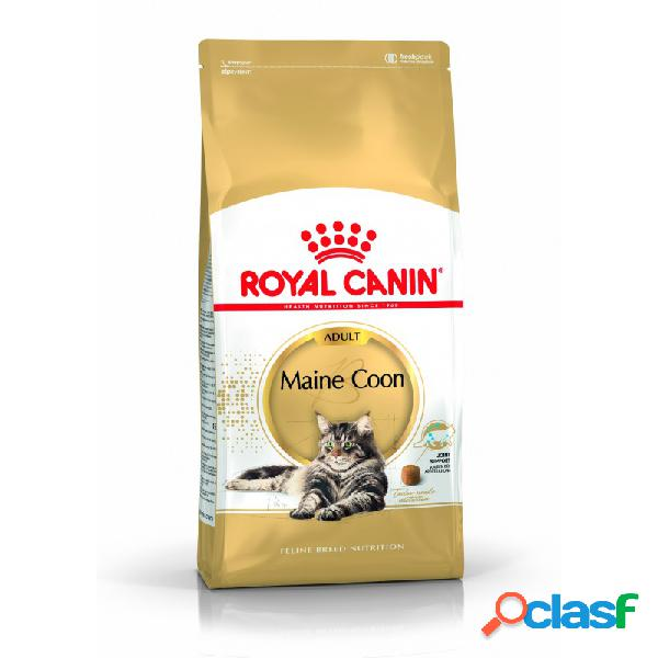 Royal Canin Razze - Royal Canin Maine Coon Adult Crocchette