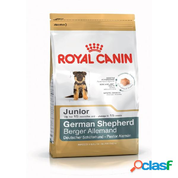 Royal Canin Razze - Royal Canin Pastore Tedesco Junior