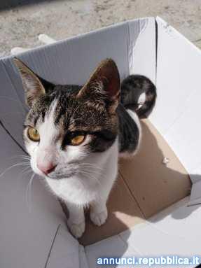GATTINI DERISDERANO FAMIGLIA Gatto Altro gatto Partinico