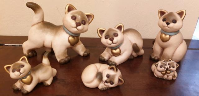Thun gatti siamesi