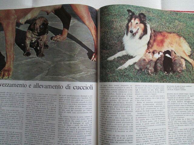 GLI ANIMALI E LA LORO VITA Enciclopedia De Agostini