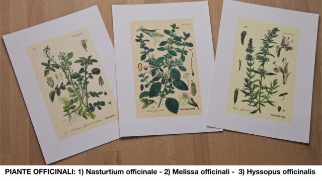 Stampe piante officinali, frutto, rustiche